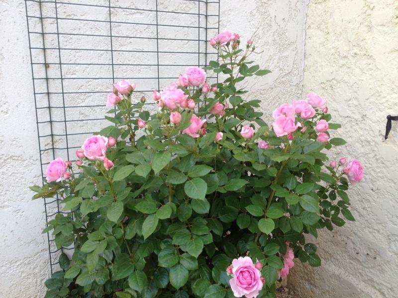 Floraisons printanières 2014 - Page 2 Ghita10