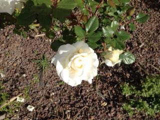 Floraisons printanières 2014 Img_0511