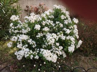 Floraisons printanières 2014 Img_0512