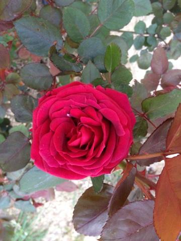 Floraisons printanières 2014 Img_0515