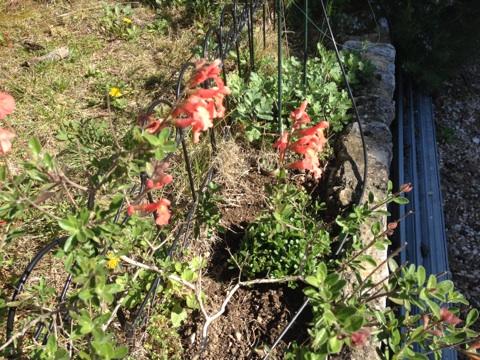 Floraisons printanières 2014 Img_0516