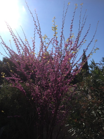 Floraisons printanières 2014 Img_0517