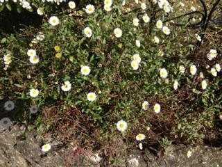 Floraisons printanières 2014 Img_0518