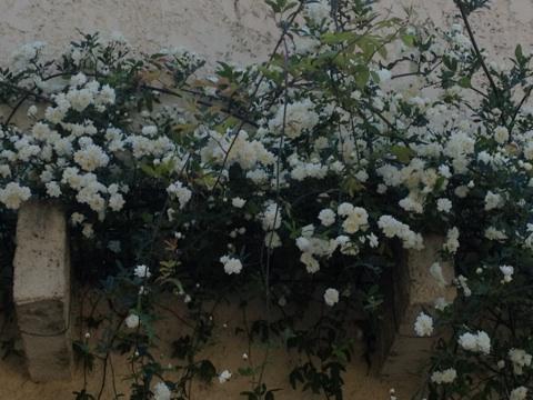 Floraisons printanières 2014 Img_0519