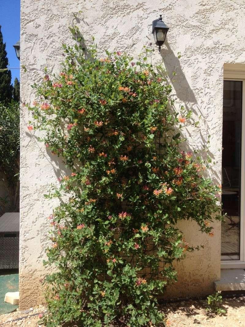 Floraisons printanières 2014 - Page 2 Img_0822