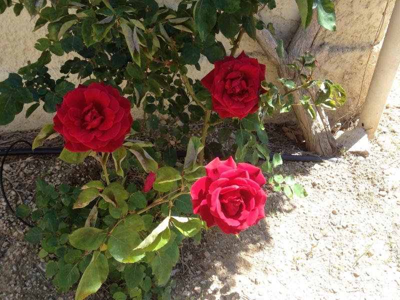 Floraisons printanières 2014 - Page 2 Img_0823
