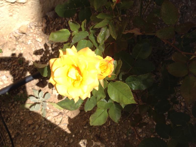 Floraisons printanières 2014 - Page 2 Img_0824