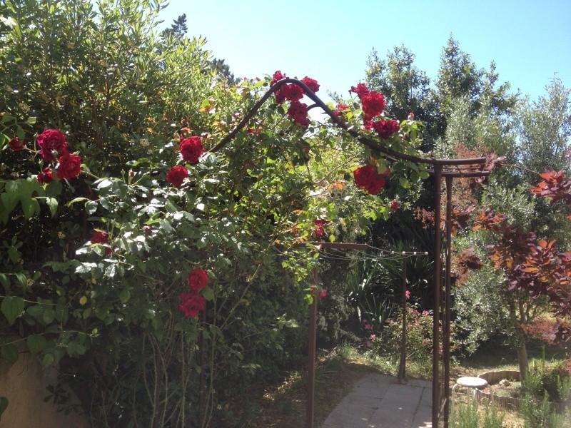 Floraisons printanières 2014 - Page 2 Img_0826