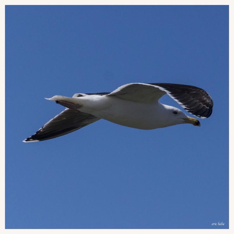 Animaux, oiseaux... etc. tout simplement ! - Page 6 _dsc6420