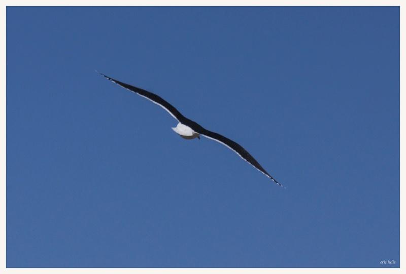 Animaux, oiseaux... etc. tout simplement ! - Page 6 _dsc6421