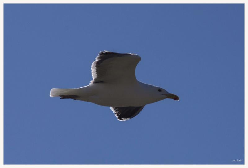 Animaux, oiseaux... etc. tout simplement ! - Page 6 _dsc6422