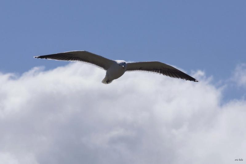 Animaux, oiseaux... etc. tout simplement ! - Page 6 _dsc6423