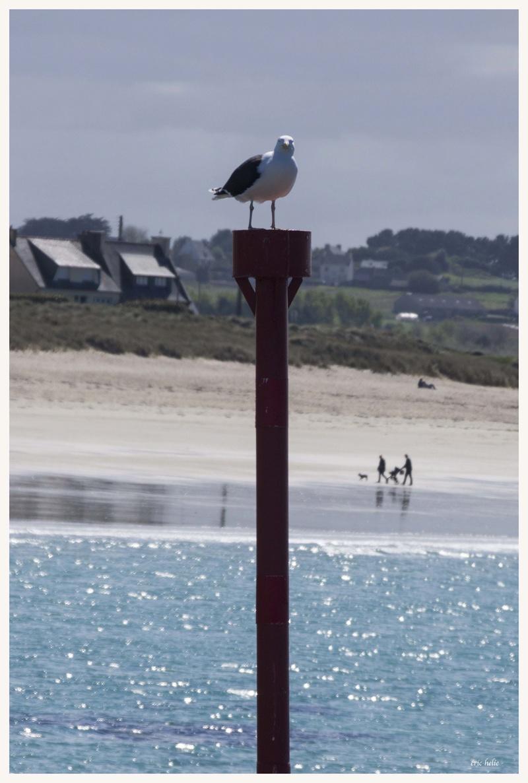 Animaux, oiseaux... etc. tout simplement ! - Page 6 _dsc6424