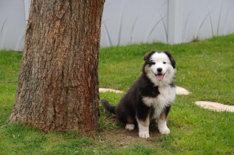 photos de chiens nés LOF et non confirmable - Page 2 Imgp7811