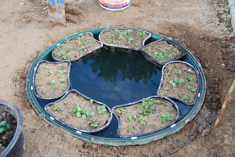 Aménagements de plusieurs mini-bassins Dsc_0331