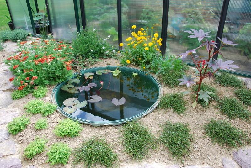 Aménagements de plusieurs mini-bassins Dsc_0610