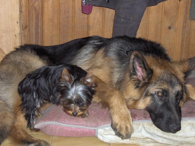 Castration jeune chien : comment se déroule la convalescence 00119