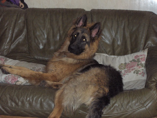 Castration jeune chien : comment se déroule la convalescence 02210