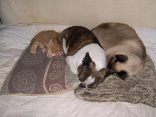 Pour quelles raisons avez vous des chiens et chats ? - Page 2 Im000212