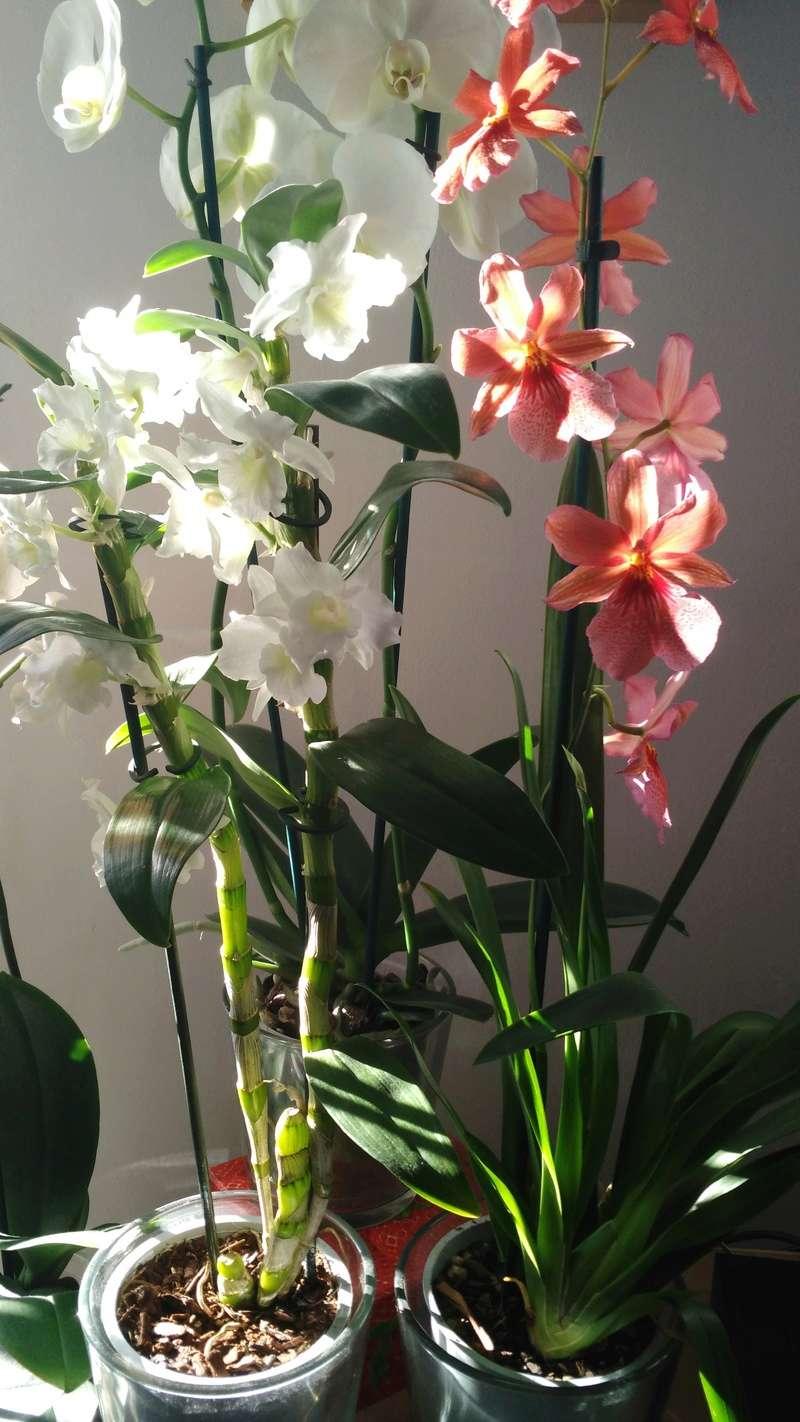 Nouvelles orchidées. Img_2010