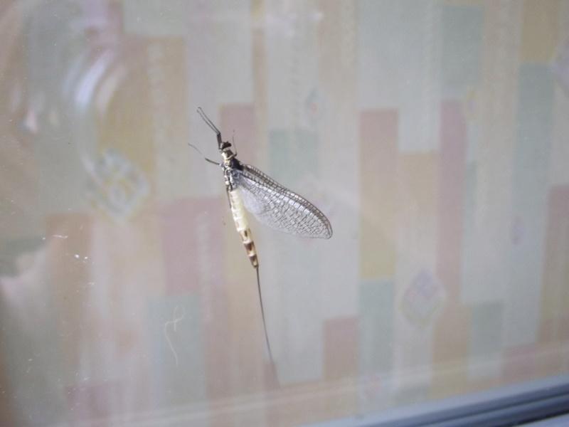 Photos d'insectes  - Page 9 Dscf0314