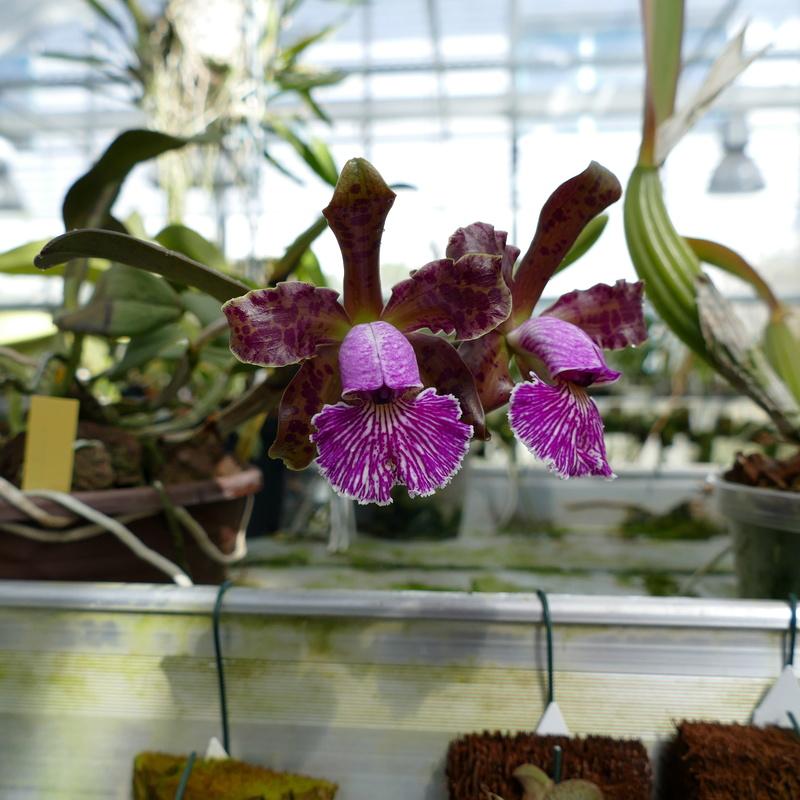 Ausflug nach Franken: Gitti (MSB), Botanik, Currlin P1000512
