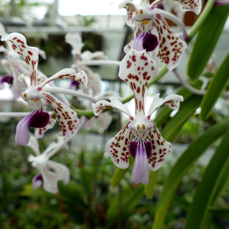 Ausflug nach Franken: Gitti (MSB), Botanik, Currlin P1000513