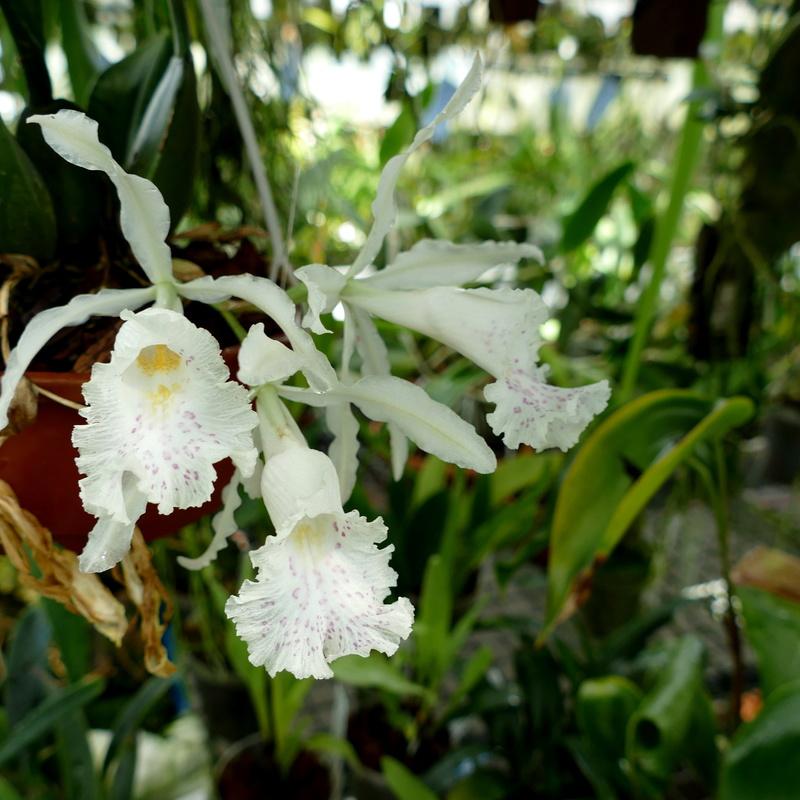 Ausflug nach Franken: Gitti (MSB), Botanik, Currlin P1000515