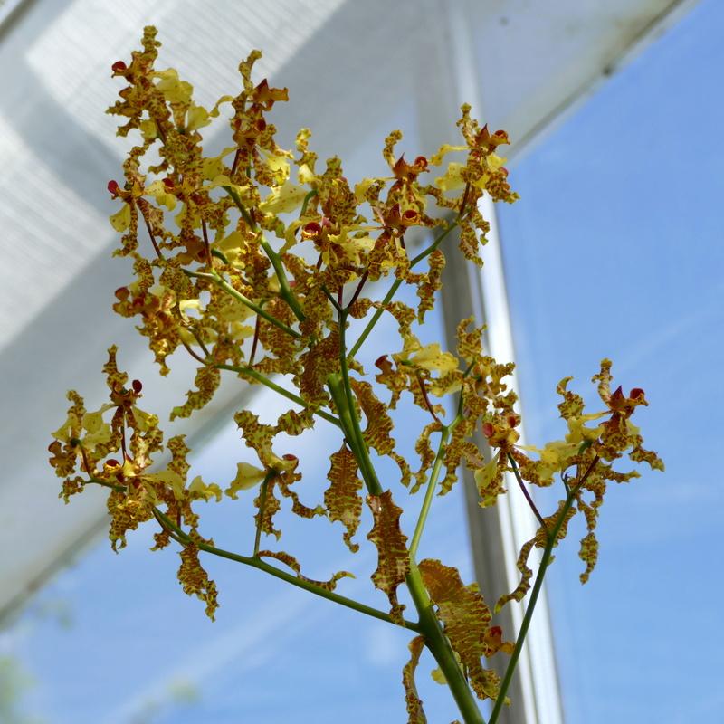 Ausflug nach Franken: Gitti (MSB), Botanik, Currlin P1000522
