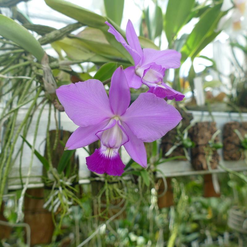Ausflug nach Franken: Gitti (MSB), Botanik, Currlin P1000523