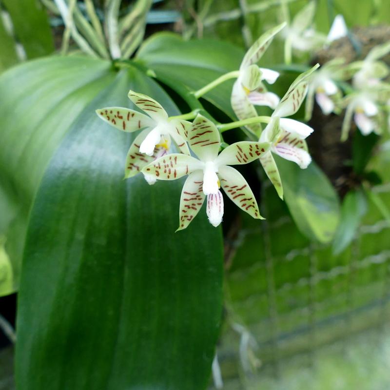 Ausflug nach Franken: Gitti (MSB), Botanik, Currlin P1000527
