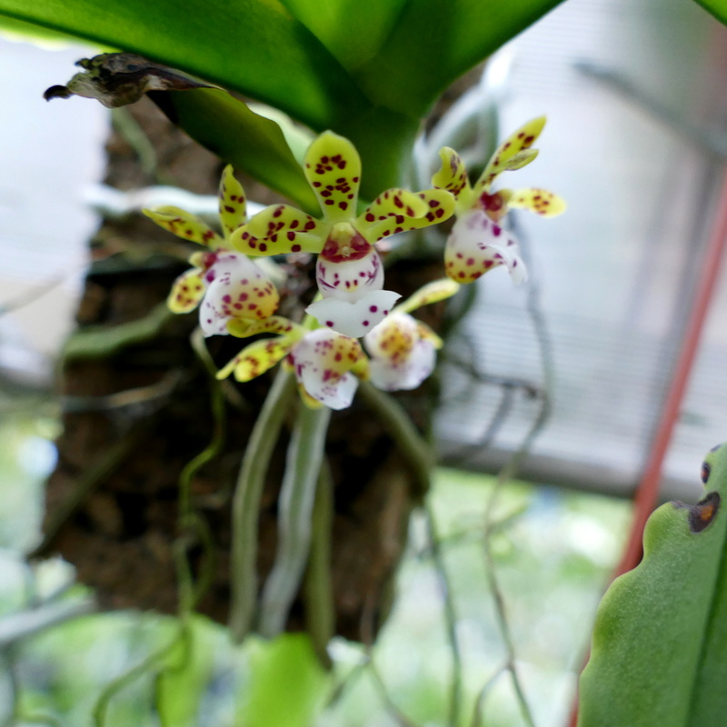 Ausflug nach Franken: Gitti (MSB), Botanik, Currlin P1000529