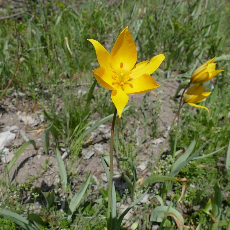 Ausflug nach Franken: Gitti (MSB), Botanik, Currlin P1000532