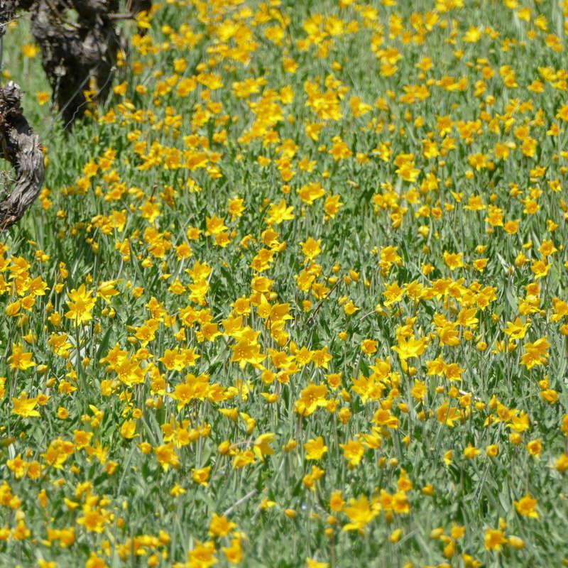 Ausflug nach Franken: Gitti (MSB), Botanik, Currlin P1000533