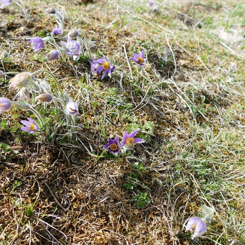 Ausflug nach Franken: Gitti (MSB), Botanik, Currlin P1000535