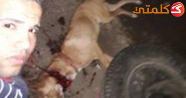 مصر# وزارة الداخلية تلاحق شابا ذبح كلبا بالمنوفية ونشر صوره على مواقع التواصل  710