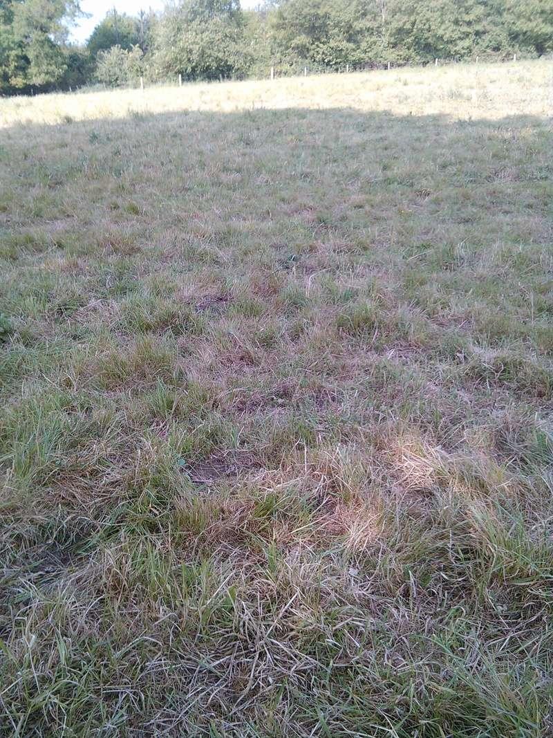 Journal des prairies 2.5 ha : photos du drone + video Img_2036