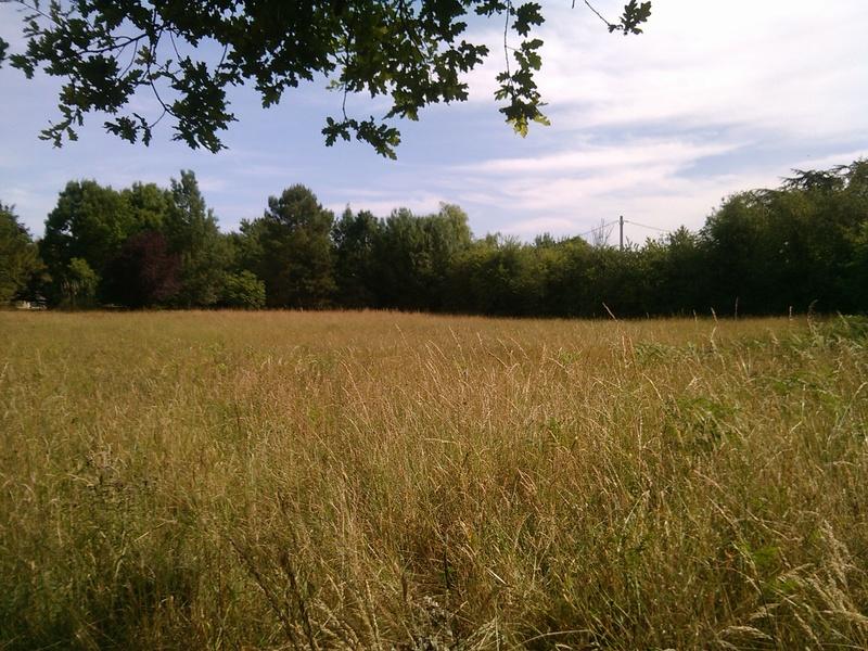 Journal des prairies 2.5 ha : au repos mais fatiguées - Page 4 Img_2080