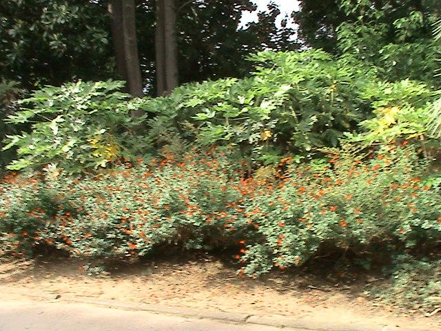 Un très beau jardin dans ma ville Dsc04946