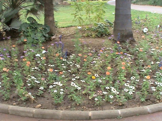 Un très beau jardin dans ma ville Dsc04947