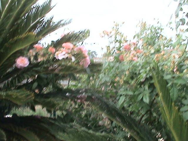 Un très beau jardin dans ma ville Dsc04948