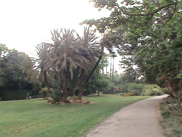 Un très beau jardin dans ma ville Dsc04949