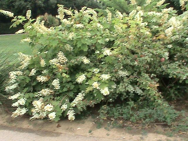 Un très beau jardin dans ma ville Dsc04952
