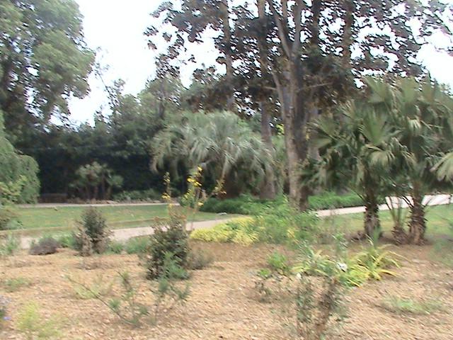 Un très beau jardin dans ma ville Dsc04955
