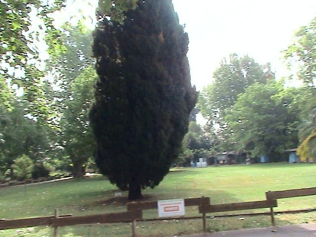 Un très beau jardin dans ma ville Dsc04965