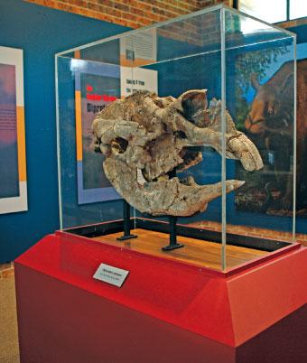 Diprotodon Project Tambar10