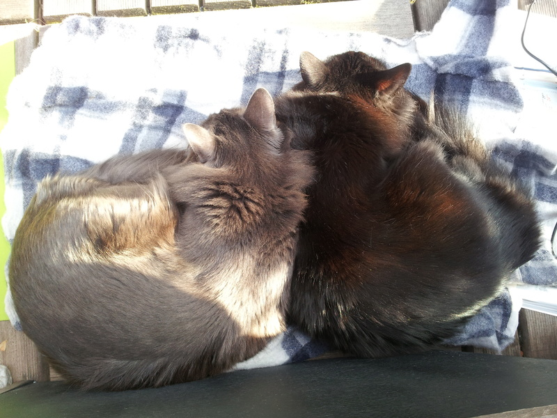 HELIO (Whiskas) et NEL (Giddy) - Page 4 20170414
