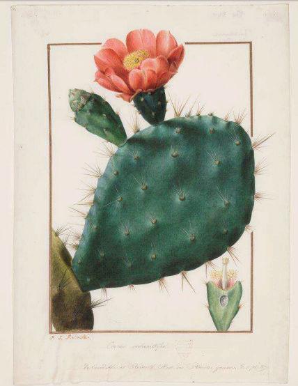 Exposition : Le pouvoir des fleurs, Pierre-Joseph Redouté. Musée de la vie romantique (Paris) Captu144