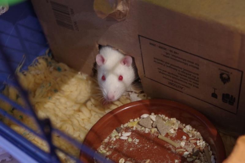 Ma joyeuse bande de petits hobbits joufflus (et poilus !) - Page 13 Imgp0711