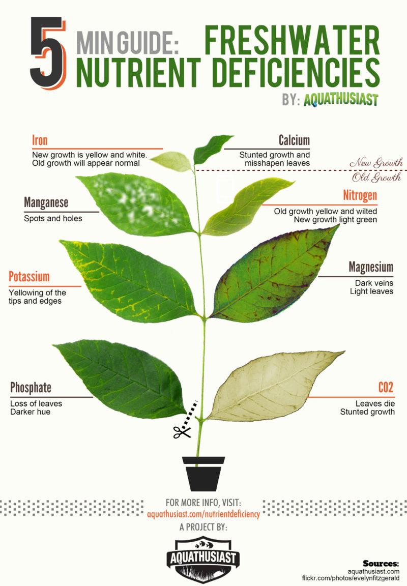 Problème plantes Freshw10
